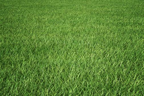 Green - Golf Course「Grass」:スマホ壁紙(7)