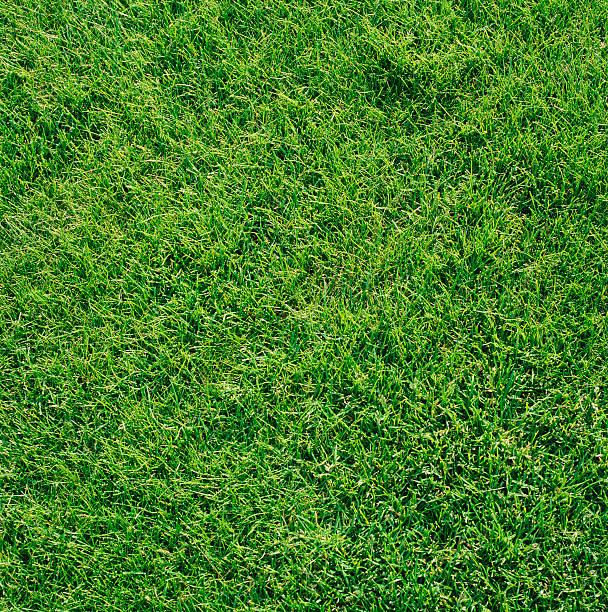 Grass:スマホ壁紙(壁紙.com)
