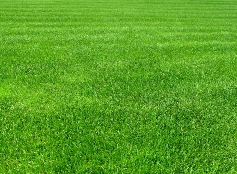 Lawn「Grass」:スマホ壁紙(5)