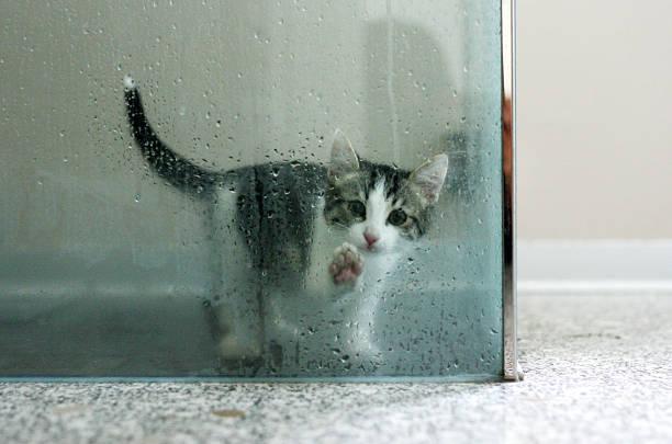 Cat stuck in a wet shower:スマホ壁紙(壁紙.com)