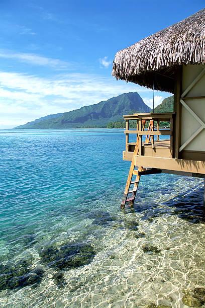 Relaxing in Polynesia:スマホ壁紙(壁紙.com)