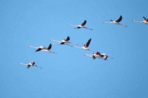 Flock Of Birds「Flamingos」:スマホ壁紙(10)