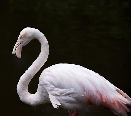 Grooming - Animal Behavior「flamingos」:スマホ壁紙(16)