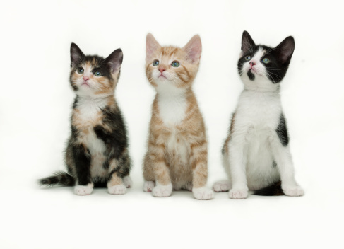 Kitten「Spellbound kittens」:スマホ壁紙(15)