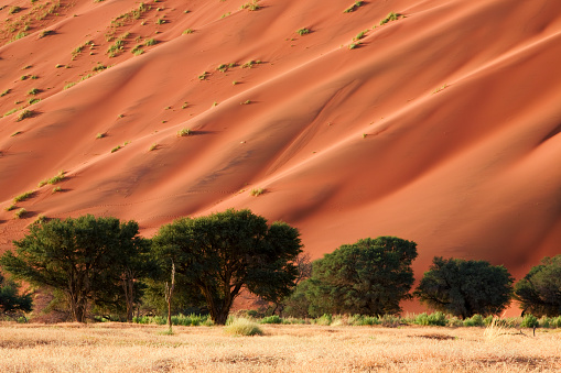 Steppe「Namib Duene」:スマホ壁紙(4)