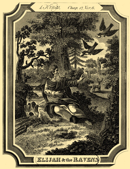 T 「Elijah is fed by ravens」:写真・画像(14)[壁紙.com]