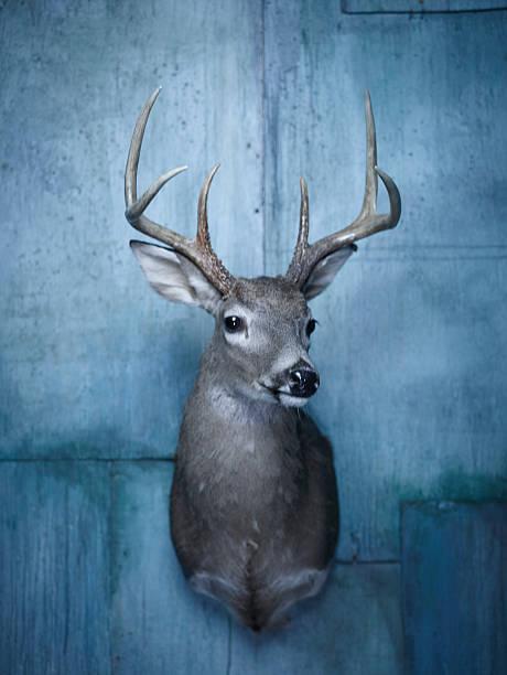 Deer bust taxidermy on blue wall:スマホ壁紙(壁紙.com)