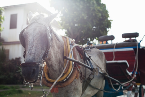 Horse-drawn carriage「Hores and Carriage Cuba」:スマホ壁紙(11)