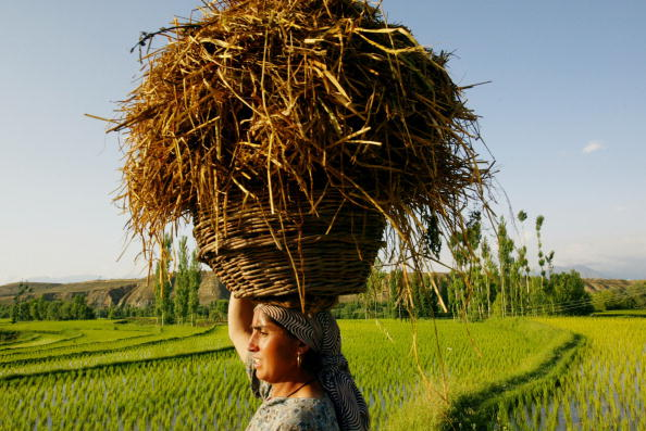 Grass「Residents in Srinagar as Tensions Ease」:写真・画像(0)[壁紙.com]