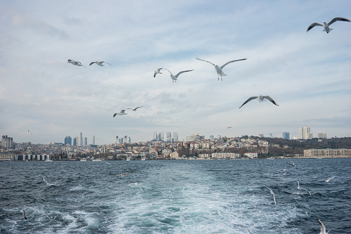 Street Style「Istanbul scape from ferryboat and seagulls are flying」:スマホ壁紙(16)