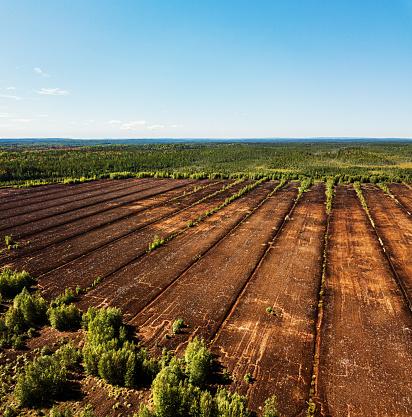 Fertilizer「Peat Moss Farm」:スマホ壁紙(0)