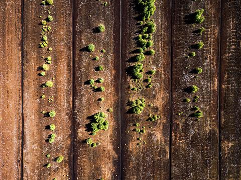 Fertilizer「Peat Moss Farm」:スマホ壁紙(1)