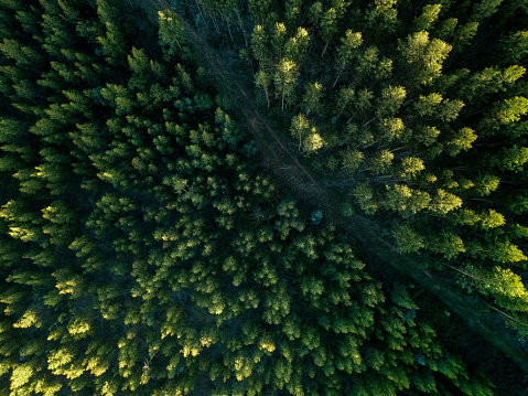 Environmental Conservation「Drone View Of A path In The Forest」:スマホ壁紙(0)