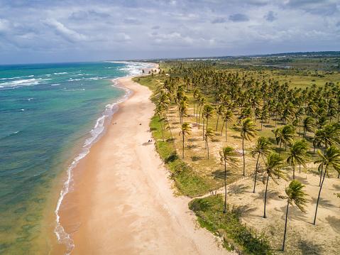 ヤシ「ブラジル、バイーア州のパーム ビーチと海岸線のドローン ビュー」:スマホ壁紙(0)