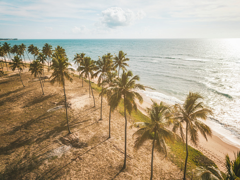 Bay of Water「Drone view on coastline with Palm beach in Bahia, Brazil」:スマホ壁紙(14)