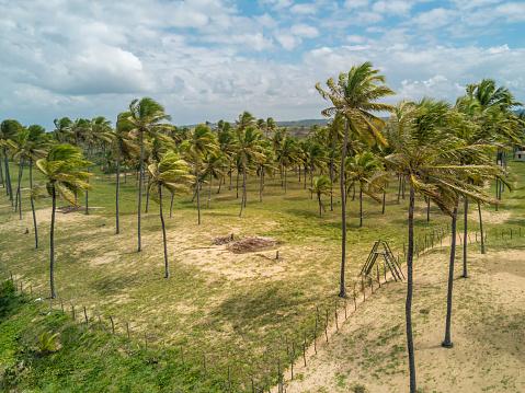 ヤシ「バイーア州、ブラジルのヤシの木が付いている海岸にドローン ビュー」:スマホ壁紙(1)