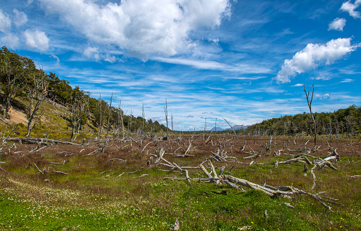 cloud「Clouds over dead trees on hill in Tierra del Fuego, Argentina」:スマホ壁紙(5)