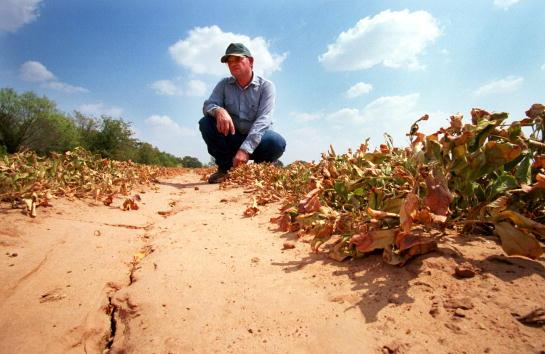 Crop - Plant「Drought in Texas」:写真・画像(18)[壁紙.com]