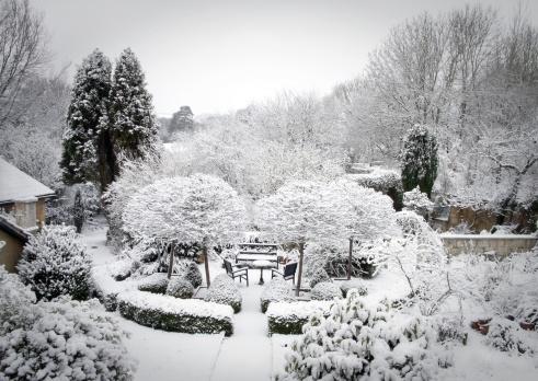 Frost「Winter Garden」:スマホ壁紙(4)