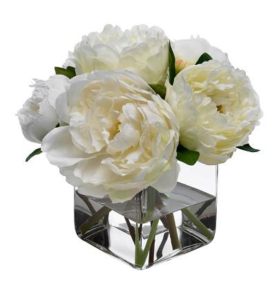 花「ゆったりと白色の背景に白」:スマホ壁紙(18)
