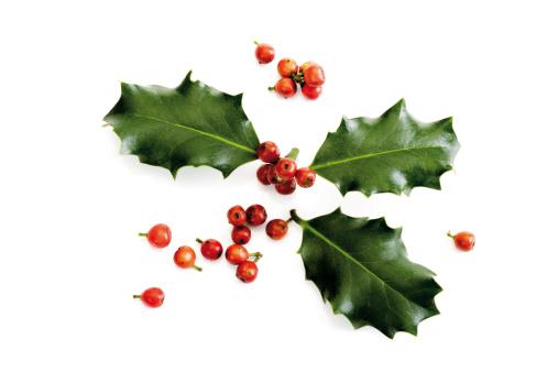 Holly「Holly twig (Ilex aquifolium), close-up」:スマホ壁紙(15)