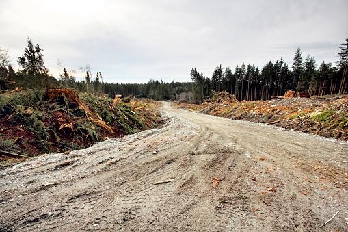 Deforestation「Logging Road」:スマホ壁紙(11)