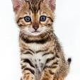 子猫壁紙の画像(壁紙.com)