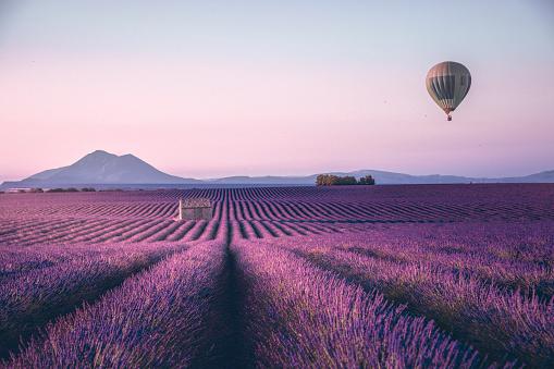 Balloon「Endless lavender field in Provence, France」:スマホ壁紙(8)