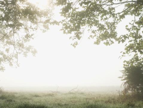 セイヨウカジカエデ「Remote fog-covered field」:スマホ壁紙(10)