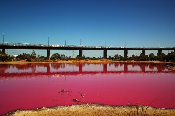 Pink Color「Melbourne's Westgate Park Lake Turns Pink」:写真・画像(6)[壁紙.com]