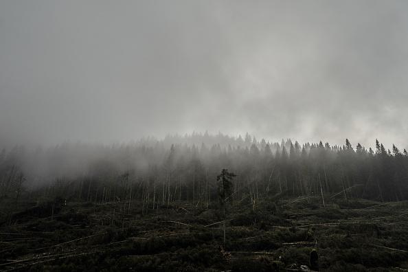 Environmental Conservation「Climate Change: The Asiago Plateau」:写真・画像(8)[壁紙.com]