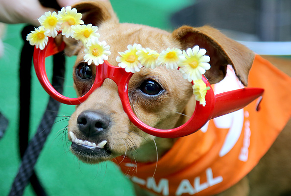 Rachel Murray「Green Works Muddy Puppies Launch Party」:写真・画像(12)[壁紙.com]