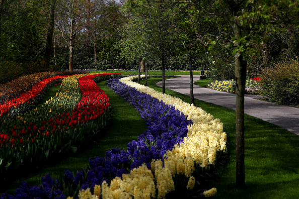 Keukenhof Gardens「Netherlands Continues 'Intelligent Lockdown' Amid Coronavirus Outbreak」:写真・画像(9)[壁紙.com]