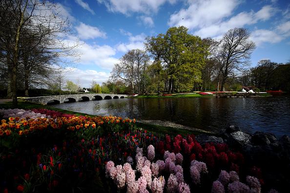 Keukenhof Gardens「Netherlands Continues 'Intelligent Lockdown' Amid Coronavirus Outbreak」:写真・画像(16)[壁紙.com]