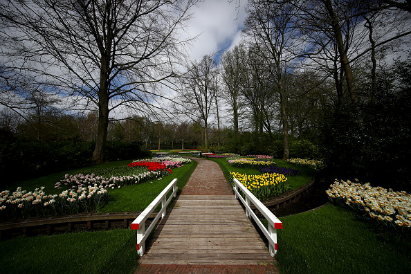 Keukenhof Gardens「Netherlands Continues 'Intelligent Lockdown' Amid Coronavirus Outbreak」:写真・画像(19)[壁紙.com]