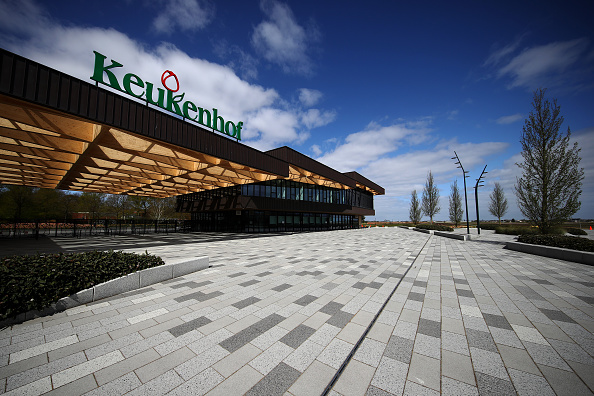 Keukenhof Gardens「Netherlands Continues 'Intelligent Lockdown' Amid Coronavirus Outbreak」:写真・画像(11)[壁紙.com]