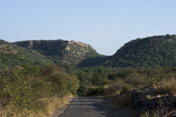 Ranthambore National Park「General Views Around Ranthambore Prior To Wedding Of Russell Brand And Katy Perry」:写真・画像(4)[壁紙.com]