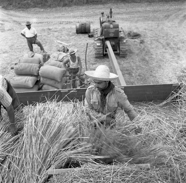 Archivio Cameraphoto Epoche「Portogruaro Mechanical Harvesting」:写真・画像(18)[壁紙.com]