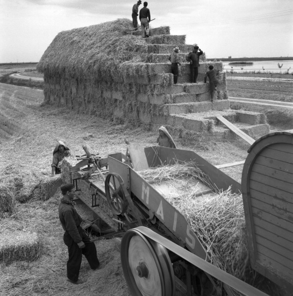 Agricultural Activity「Portogruaro Mechanical Harvesting」:写真・画像(12)[壁紙.com]