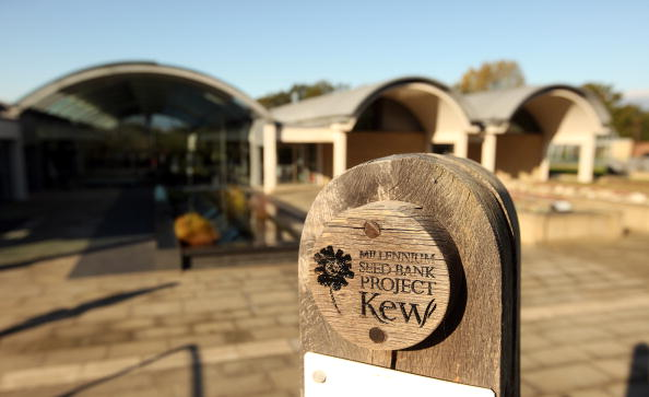 Seed「Kew Millennium Seed Bank Project Holds 10% Of World's Wild Plant Species」:写真・画像(13)[壁紙.com]