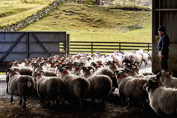 Agriculture「UK Hill Farmers Face Uncertain Future As Brexit Looms」:写真・画像(6)[壁紙.com]