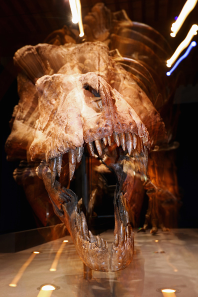 Paleontologist「T rex named Trix at Naturalis Museum of Leiden」:写真・画像(17)[壁紙.com]