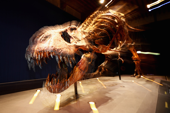 Paleontologist「T rex named Trix at Naturalis Museum of Leiden」:写真・画像(16)[壁紙.com]