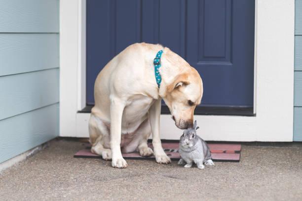 Adorable bunny and medium-size dog hanging out together on front porch:スマホ壁紙(壁紙.com)
