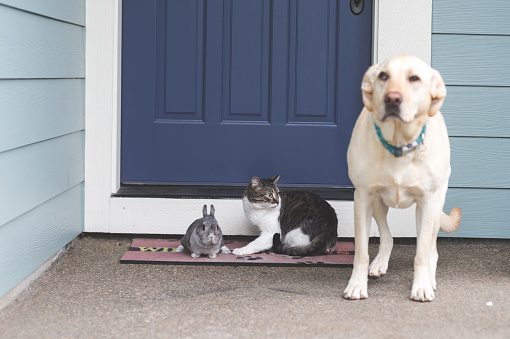 Baby Rabbit「Adorable bunny medium-size dog, and cat hanging out together on front porch」:スマホ壁紙(7)