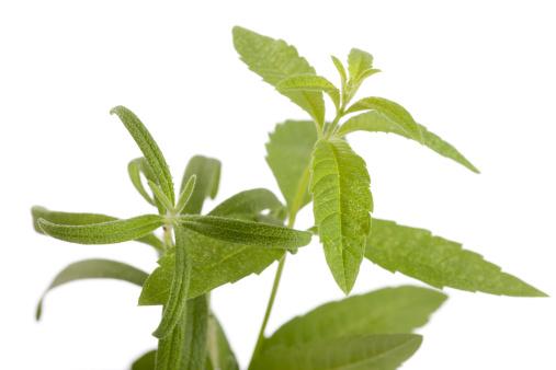 Lemon Verbena「Rosemary and Lemon Verbena」:スマホ壁紙(17)