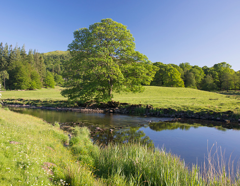 UNESCO「The tranquil River Brathay, Elterwater, Lake District National Park, Cumbria, England, UK」:スマホ壁紙(12)