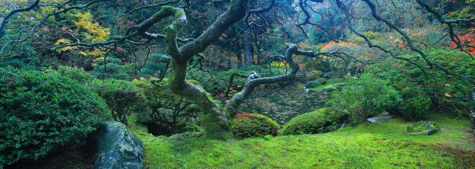 Japanese Maple「The tranquil Japanese Garden located in the west hills of the city of Portland, Oregon.」:スマホ壁紙(11)