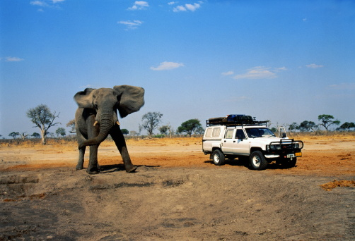 Elephant「4x4 car next to African elephant, Savuti, Botswana」:スマホ壁紙(14)