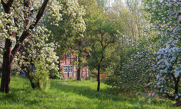 Half-timbered farm house and blooming apple trees in spring:スマホ壁紙(壁紙.com)
